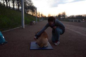 Das Foto zeigt die Teilnehmerin von Moniques Kurs. Sie hockt neben ihrem Hund, der auf einer Matte liegt. Sie führt ein Leckerli erst zu seiner einen, dann zur anderen Seite, sodass seine Muskeln trainiert werden sollen. Im Hintergrund geht die Sonne unter, das Licht ist schwach.
