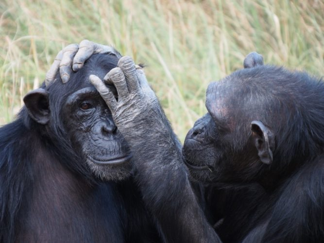 Primatenforschung